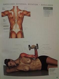 muscle diagram - SHOULDERS: external rotation