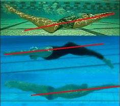 How to Improve Your Underwater Dolphin Kick