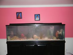 250 gallon fish tank in living room but can be seen from den