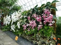 patrick blanc vertical garden - Buscar con Google