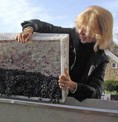 Kathy adding Cabernet Sauvignon to destemmer at Tin Lizzie Wineworks in Clarksville, Maryland