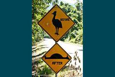 Cassowary Crossing lol