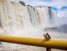 Norway Tourist Attractions: A Magical 48 Hours in Oslo Norway Tourist Attractions, Crystal River Cruises, Puerto Vallarta Beach, Underground Pool, Luxury Cruise Lines, 7 Natural Wonders, Holland America Cruises, Mini Waterfall, Iguazu Falls