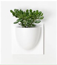 Vertiplants vit via Butikrufft. Click on the image to see more!