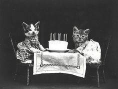 Cats enjoying a birthday cake | Photo by Harry Whittier Frees