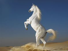 White Horse best computer backgrounds Desktop hd Wallpaper