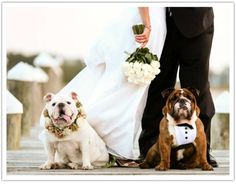 Dogs dressed up like a bride and groom as well. Photography Joe Mikos