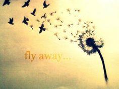 Resultado de imagen de spread my wings
