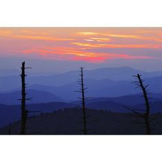 Dead Trees And Mountains At Dusk From Clingmans Dome Great Smoky Mountains National Park North Carolina Canvas Art - Yves Marcoux Design Pics (17 x 11)