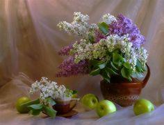 цветы сирени фото-01