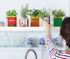 Have fresh herbs year-round by planting an adorable tea tin garden.