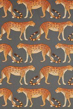 Slide View: 3: Leopards Wallpaper