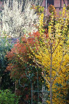 2014-04-24: spring has sprung