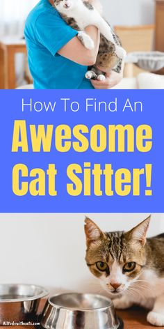 Discover proven tips to help you find an awesome cat sitter your fur baby will love. Going away if you have a cat needn't be a problem if you find a good pet sitter. Discover 7 vital questions you need to ask a cat sitter, what you need to provide, and lots more.. Human Babies, Fur Babies, Ikea Cat, First Time Cat Owner, All Types Of Cats, Homemade Cat Food, Indoor Cats, Cat Sitter, Kitten Care