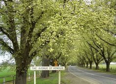 Bacchus Marsh, Avenue of Honour, a heritage-listed memorial avenue from each tree with a personalised plaque. Melbourne Victoria, Remembrance Day, Emergency Response, Country Roads, Bacchus, Australia, Inspiration, Biblical Inspiration, Anniversaries