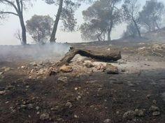 Bética Aceitera combatirá con oro líquido la reforestación del incendio de Quesada