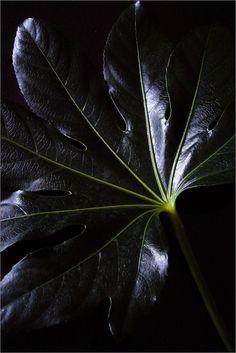 color | black - leaf - photography - texture - color boards - design - art - shades of black - moody - dark
