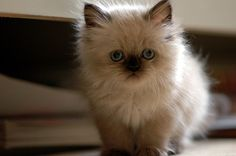 growing up,used to have cats that looked like this