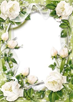 cadre rose blanche Green Transparent PNG Photo Frame with White Roses Rose Frame, Flower Frame, Family Photo Frames, Picture Frames, Walpapers Iphone, Picture Borders, Wallpaper Nature Flowers, Boarders And Frames, Birthday Frames