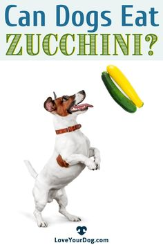 Curious to find out if Zucchini is a good treat for your pup? Find out about the nutritious benefits Zucchini can provide your canine companion in this article! #LoveYourDog #DogDiets #CanDogsEatZucchini #DogsEatingHumanFood #CanDogsEatHumanFood #DogHealth Can Dogs Eat, R Dogs, Dog Information, Dog Eating, Fun Activities, Health Benefits, Zucchini, Your Dog, How To Find Out