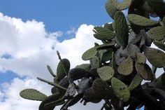 Algún lugar de #Jalisco