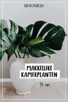 kitchen ideas – New Ideas Ikea Plants, Indoor Plants, Living Room Inspiration, Interior Inspiration, Sparks Joy, New Room, Cozy House, Gardening Tips, House Plants