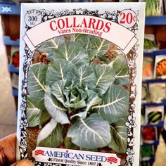 #OMG! This is the absolute best #Deal of the Day #American Seed for .20 cents. Lord Jesus l am like a kid in an candy store that found gold. Yipppeeeeee #spring #greenthumb #garden #foodspotting #snaptweet #iphoneography