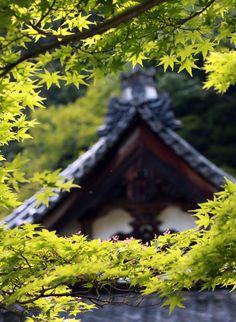 奈良市 正暦寺 本堂 新緑 睡蓮 : 魅せられて大和路