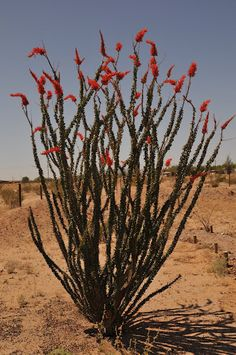 I Want To Transplant One Of These Out The Arizona Desert Next