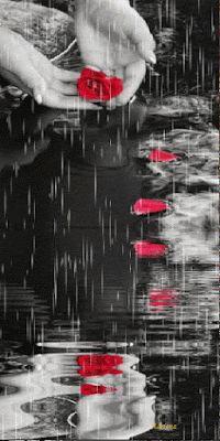 Petals in the rain Splash Photography, Rain Photography, Black And White Photography, Rainy Night, Rainy Days, Beautiful Gif, Beautiful Roses, Color Splash, Color Pop