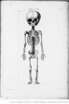 premierepage:  [Illustrations de Nouvelles démonstrations d'accouchements] / Forestier, grav.; A. Chazal, dess.; Jacques-Pierre Maygrier, aut. du texte, 1822 Squelette du foetus.