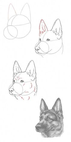 Learn To Draw Animals - Animal drawings sketches, Pencil drawing tutorials, Dog drawing tutorial, Pencil drawings, Drawings - Dog Drawing Tutorial, Pencil Drawing Tutorials, Pencil Art Drawings, Art Drawings Sketches, Easy Drawings, Drawings Of Dogs, Colorful Drawings, Cute Dog Drawing, How To Draw Sketches