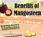 Benefits of Mangosteen - NaturalNews.com