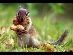 Funniest Squirrel Videos - Best and funniest squirrel & chipmunk 2017 - ...