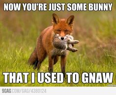 Okay I really don't like that song but if you add a fox and some rhyming, then I'm going to giggle