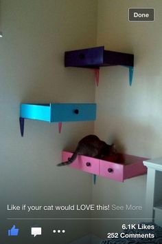 "Dresser drawer ""shelves"" and other cat furniture ideas Dresser Drawer Shelves, Top Drawer, Pet Beds, Dog Bed, Pet Furniture, Furniture Stores, Refurbished Furniture, Furniture Outlet, Furniture Repair"