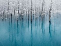 ice trees in water