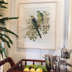 A signed limited edition framed print of RING-NECKED PARROTS signed PA Langdon ~ $120. It is numbered limited edition no.51 of 500 and is in very good condition. 64.5 x 54.5cm. Please comment sold to purchase. Pick up Paddington Brisbane or I can organise a courier. I have a detailed shot coming up next. #instagramshop #home #vintage #collector #collections #interiors #interiordecorating #homedecor #home #decor #brisbane #vintage #vintagestyle #vintageforsale #parrot #art #limitededition…