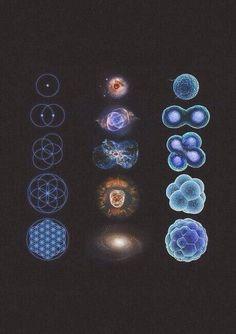 Geometria + Astronomia + Biologia