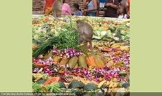 Image result for lopburi monkey festival