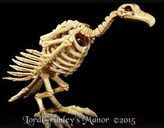 """Skeleton Vulture Price: $29.99 The Master's pets have been rising from the pet cemetery and now roam the grounds.  Please help the Goons find good homes for these beloved pets.  Skeleton Vulture Bonez is a full size vulture skeleton made of think plastic making it suitable for indoor and outdoor use.  Skeleton Vulture Bonez has a pose-able neck.  He measures  10"""" Tall x 15"""" Long  x 8"""" Wide.Questions ? Contact us at order@lordgrimley.com"""