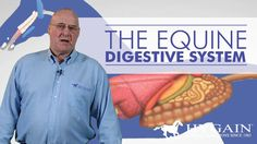 A short and informative video on the horse's digestive tract given by a Equine Vet. L2 equine students should find this helpful for their feeding and b... - Diane Blackie - Google+
