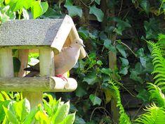 Bird, Outdoor Decor, Home Decor, Homemade Home Decor, Birds, Interior Design, Home Interiors, Decoration Home, Home Decoration