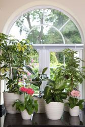 Indoor Plants - Potted plants Care - Plant Care - Garden Care - Bayer Garden