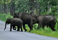 Wildlife Tour Packages in India - Book your Wildlife Tours in India.Just to bring you a real wildlife experience, we are here offering wildlife vacation, safari holiday tour packages. Honeymoon Tour Packages, Forest And Wildlife, Spotted Animals, Kerala India, South India, Elephant Sanctuary, Kerala Tourism, India Tour, Tourist Places