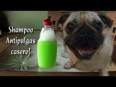No gaste más dinero en químicos caros y llenos de contraindicaciones que hacen daño a sus mascotas. Flea Shampoo, Diy Shampoo, Animals And Pets, Cute Animals, Dog Recipes, Love Pet, Little Dogs, Dog Care, Fleas