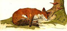 SOLD - Red fox sleep tree forest ORIGINAL ART WATERCOLOR animal painting Juan Bosco