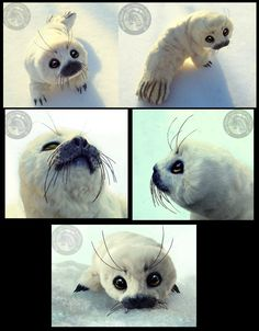 -SOLD- HAND MADE Poseable Baby Harp Seal! by Wood-Splitter-Lee on deviantART