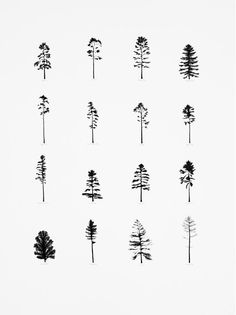 Trees of the U.S.
