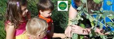 How to Save Your Own Seeds! - Little Sprouts Learning
